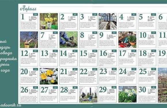 Что можно уже сажать на даче в апреле в открытый грунт? Календарь