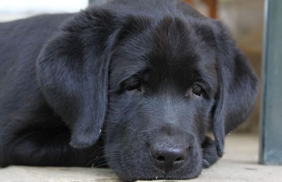 Сезон активности клещей начался в России. Чем обрабатывать собаку?