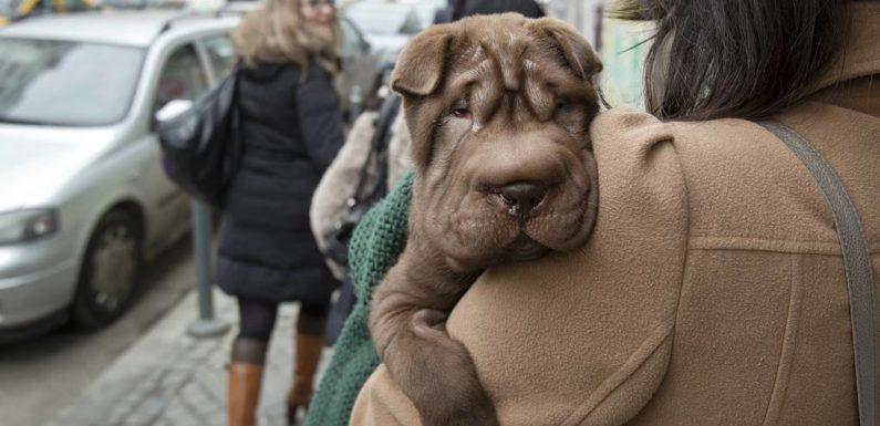 Новый список потенциально опасных пород собак-13 пород